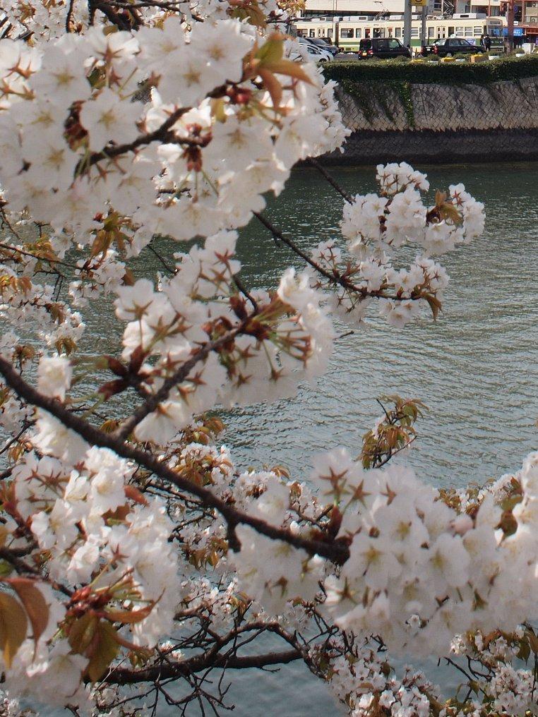 春の平和公園