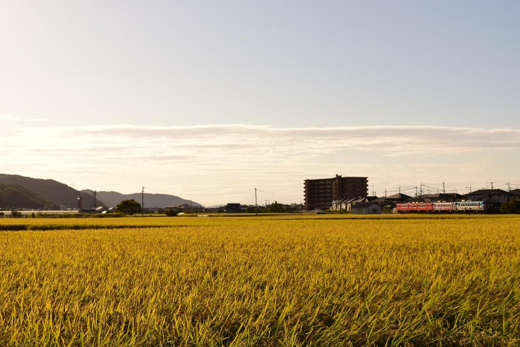 収穫間近の稲穂と秋の空とキハ