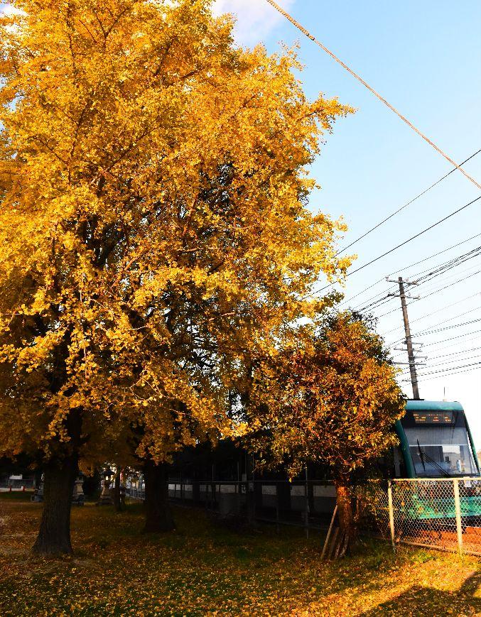 黄色い木陰
